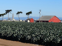 Artichoke country . . .